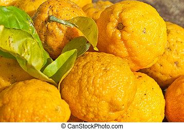 Wild Australian Native Bush Lemons