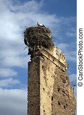 Stork Nest, Marrakech, Morocco