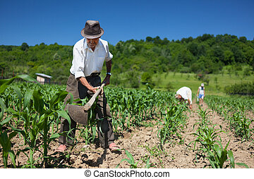 Family working the land - Family of rural workers weeding on...