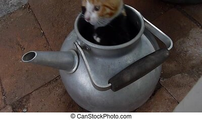kitten in a kettle - playful young cat in a kettle