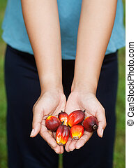 Oil palm fruits - Asian girl holding a bunch of fresh...