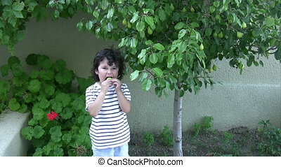 Little Boy picking pear