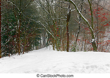 Winter landscape, a forest path with a small town Pruuml;m...