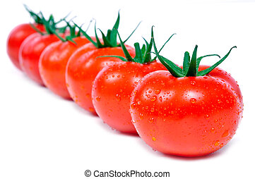 fresh tomatoes in a row with wter drops
