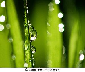 verde, pasto o césped, pajas, withd, gotas