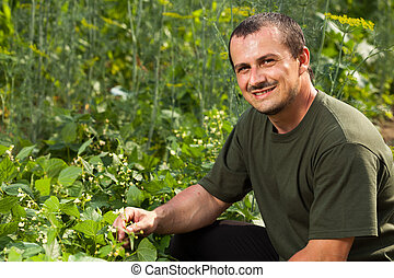 Farmer near a field of broad beans plants - Young farmer...