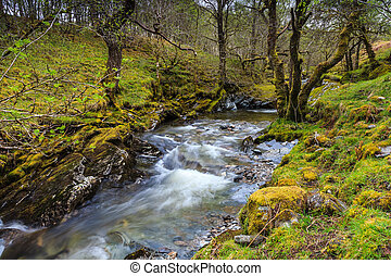 Wild river floating through a forrest in Scotland