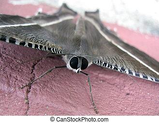 Moth, Bako National Park, Sarawak Borneo, Malaysia