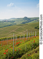 Tuscany vineyard - Tuscany Vineyard in the middle of the...