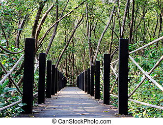 wooden bridge  - A wooden bridge go to the mangrove forest