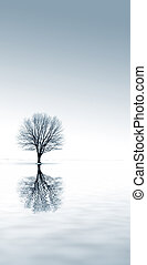 Winter Solitude - winter snow and a single tree with...