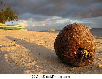 Coconut, Malapascua, Philippines
