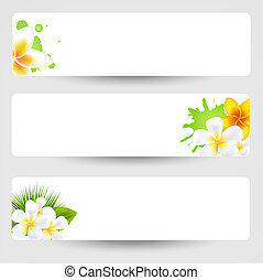 Banners With Flowers Frangipani, Isolated On Grey, Vector...