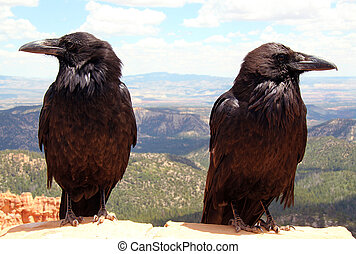Ravens, Bryce Canyon National Park, Utah, USA