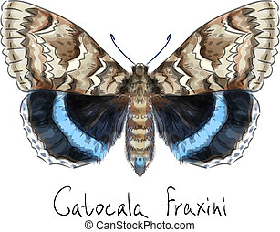 Butterfly Catocala Fraxini. Watercolor imitation.