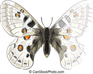 Butterfly Parnassius Apollonius. Unfinished Watercolor drawing imitation. Vector illustration.