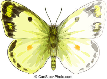 Butterfly Colias Erate. Unfinished Watercolor drawing imitation. Vector illustration.