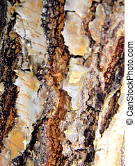 Close Up of Tree Bark - Close up of tree bark