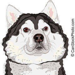 vector closeup portrait of a dog Alaskan Malamute breed -...