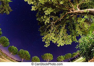 Trees and vegetation of Tuscany at Night, Italy