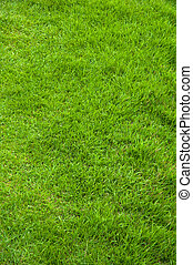 fresh spring green grass - Close-up image of fresh spring...