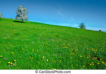 Flowering Tree - Grazing Cows and Flowering Tree Surrounded...