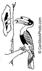 Bird Hornbill