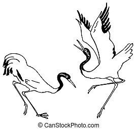 Birds crane dancing
