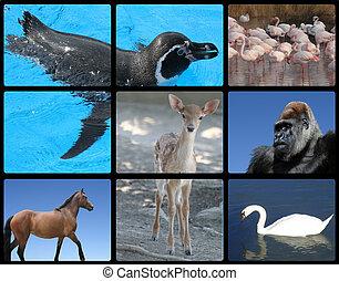 doux, animaux, Oiseaux