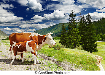 Cow and calf - Mountain landscape with cows and forest