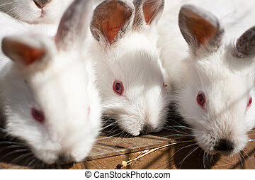 Closeup of a baby white rabbit in a hutch