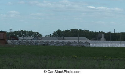 summer Greenhouses on farm