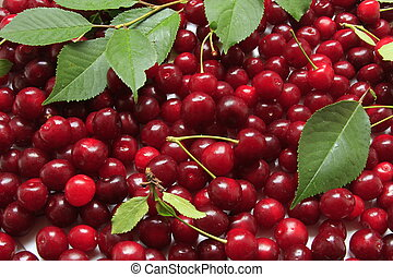 freshly picked sour cherries format filling