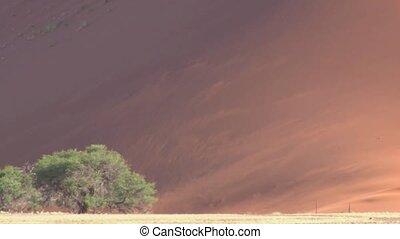 Sossusvlei, Namibia - Wind blowing over Sanddune Sossusvlei,...