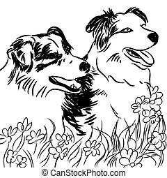Two Border Collie Dogs in Flower Field - An image of two...