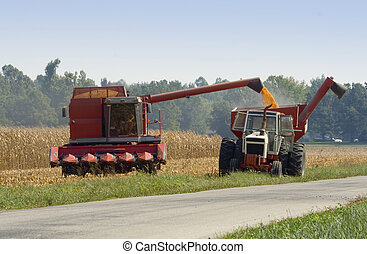 Corn Harvest (2) - Harvesting corn and transferring to a...