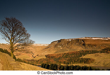 21 - Lone tree at Dovestone reservo - A lone tree without...