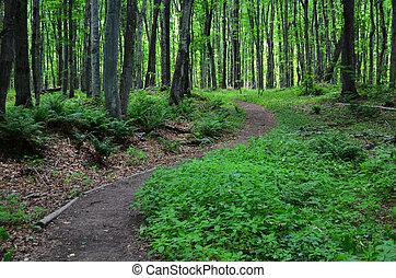 caminho, através, madeiras