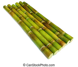 Sugar cane - Bunch of fresh sugar cane over white background
