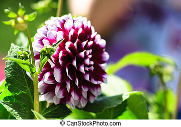 verry nice natural flowers