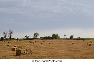 Freshly baled hay in a summer field - Freshly baled hay in...