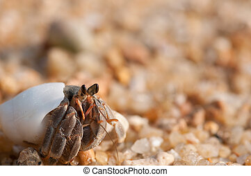 hermit crab on the beach,Surin island Thailand