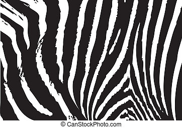 Texture of zebra skin background