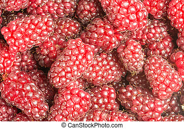 Tayberries fresh sweet ready to eat