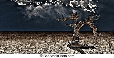 Old Desert Tree