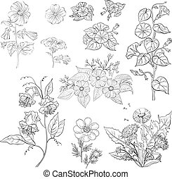 Flowers, set, outline - Set of flowers isolated on white...