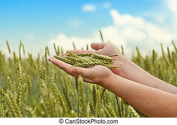 Hands with wheat ears