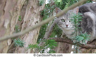 Feral Kitty in Tree - Feral kitty in tree looking at camera,...