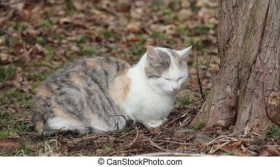 Feral Cat - Feral cat, between 6-8 months old, sitting by...