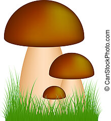 Mushrooms (boletus) standing in the grass on white...